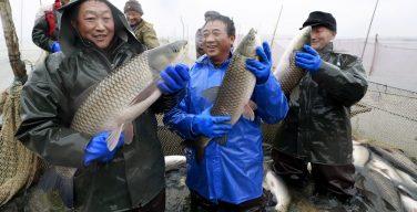Pesqueiros chineses não dão trégua à América Latina