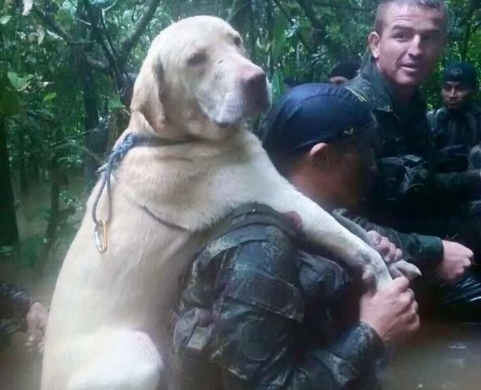 Colombian K-9s Help Rid Country of IEDs