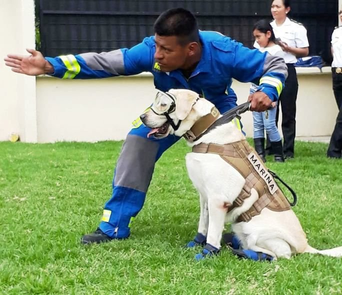 Mexican Navy K-9 Teams: Hope After the Earthquake