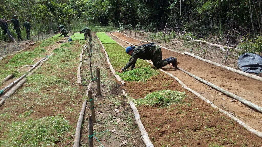 Colombian Army Destroys Coca Seedbeds in Guaviare