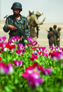Parallels in Narcoterrorism