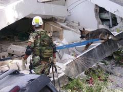 Uruguayan K-9 Unit  Supports Rescue Efforts