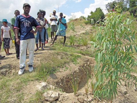 Returning Trees, Jobs to Haiti's Eroded Hills