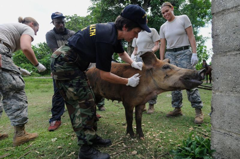 Continuing Promise Veterinarians to Provide Training for Jamaican Counterparts