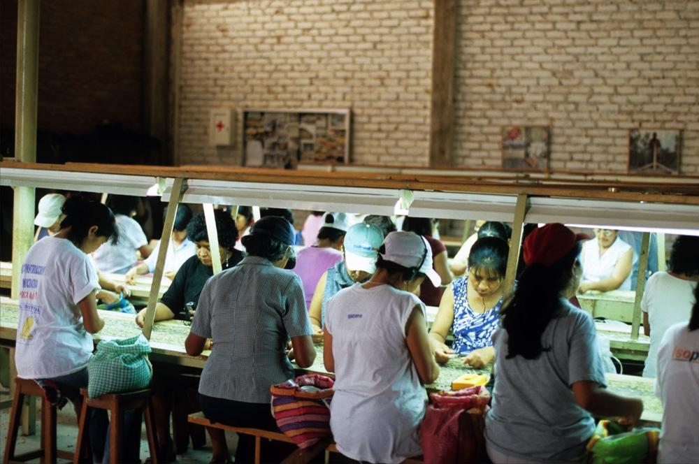 Despite Eradication Efforts, Peruvian Coca Production Is Rising — Again
