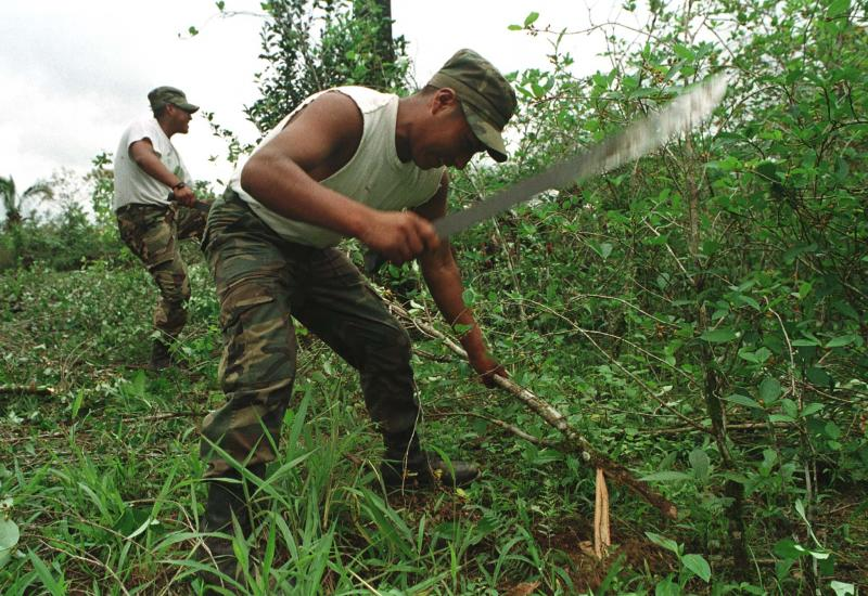Coca Eradication in Bolivia Insufficient to Cut Production