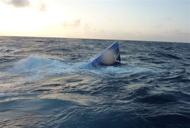 Operation Martillo: U.S., Honduran forces seize semi-submersible