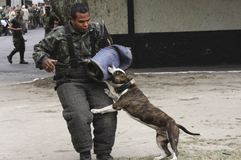 Military Dogs Play Key Role In Operation Arcanjo