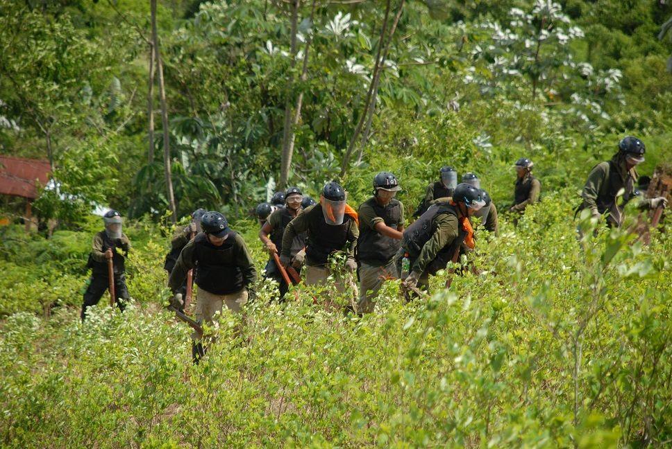 Coca cultivation in Peru falling