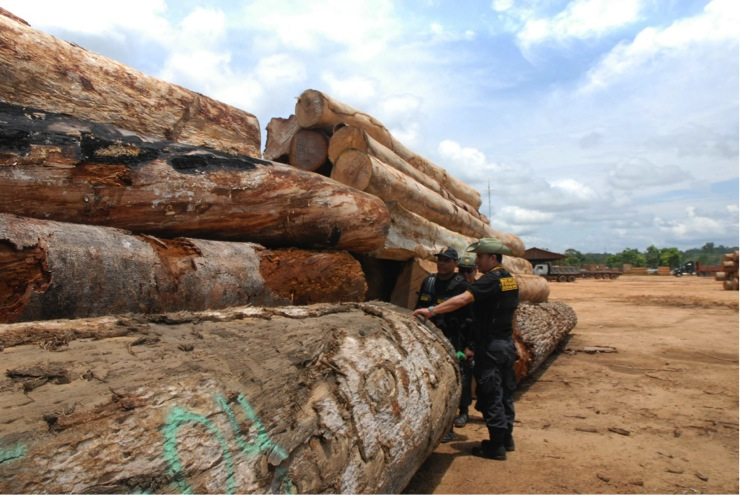 Perú's security forces fight illegal logging