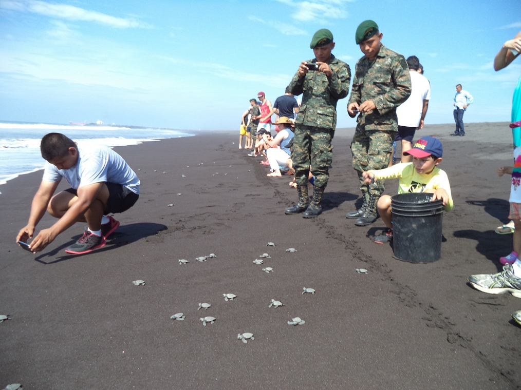 Guatemalan Armed Forces Protect, Conserve Imperiled Turtle Eggs