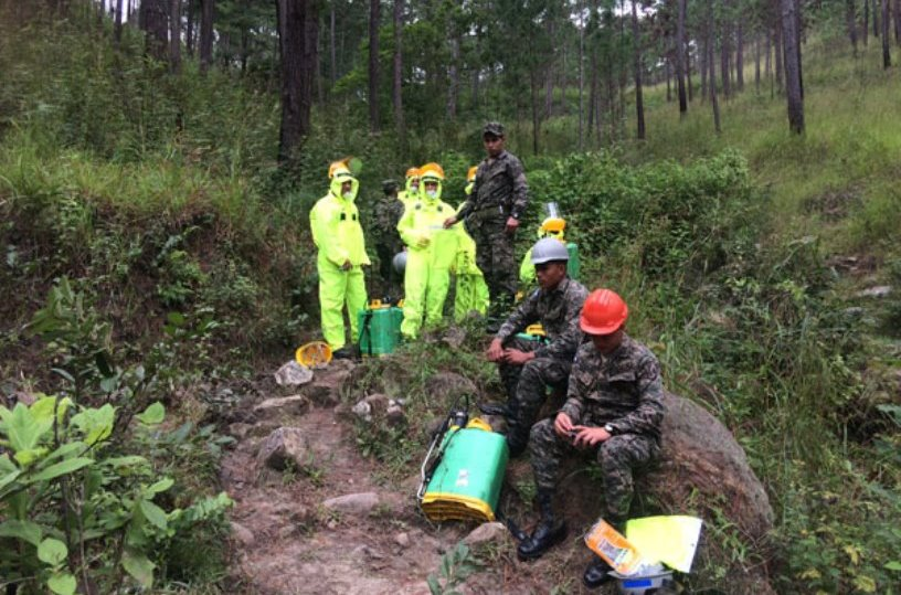 Honduran Armed Forces Battle Pine Beetle Infestation in Effort to Save Forests