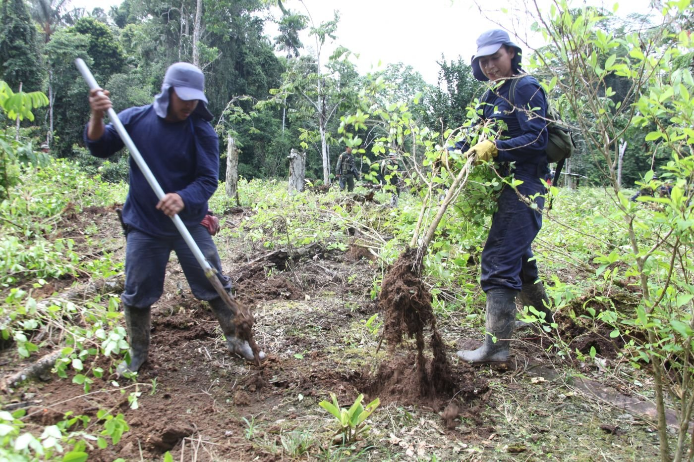 Colombian Security Forces Focus on Crop Substitution in Fight Against Drug Trafficking