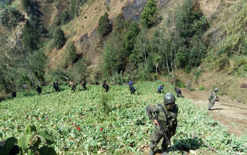 Guatemalan Armed Forces Help Eradicate Heroin-producing Plants