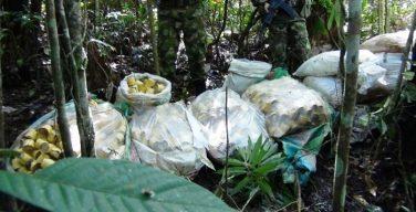 Exército da Colômbia encontra minas antipessoais do Clã do Golfo