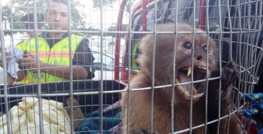 Ecuadorean and Colombian Service Members Counter Endangered Species Trafficking