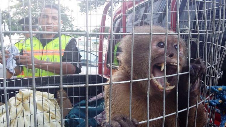 Militares do Equador e da Colômbia combatem tráfico de espécies em risco de extinção