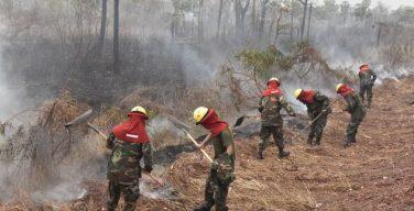 Bolivia recibe apoyo internacional para combatir los incendios de la Amazonia
