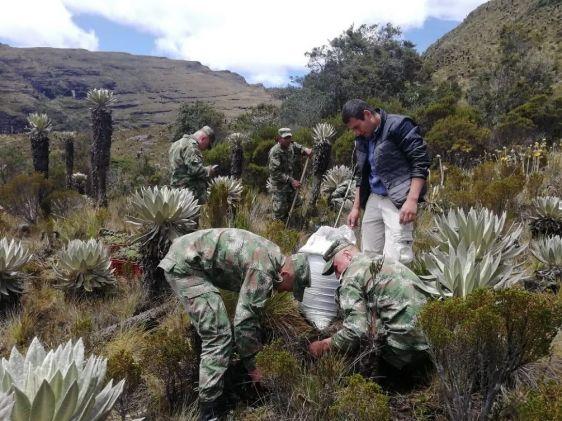 Colombia lanza ofensiva militar contra la deforestación