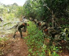 Colombia's Military Offensive Against Cocaine