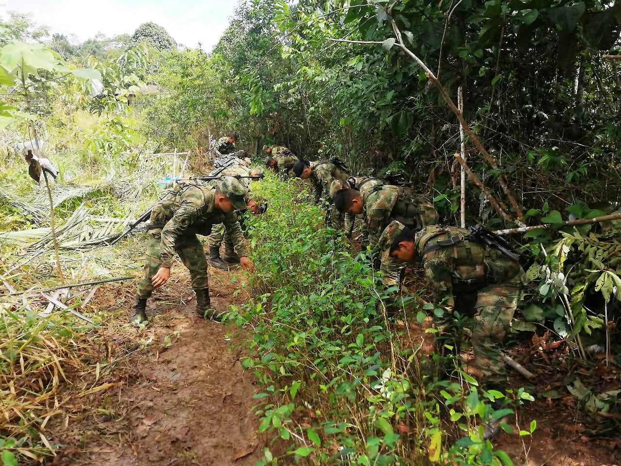 Ofensiva militar de Colombia contra la producción de cocaína