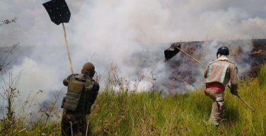 Forças Armadas promovem Operação Verde Brasil 2 de combate ao desmatamento na Amazônia