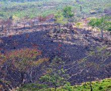 Guatemala enfrenta incendios forestales provocados por el narcotráfico