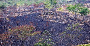 Guatemala enfrenta incêndios florestais provocados pelo narcotráfico