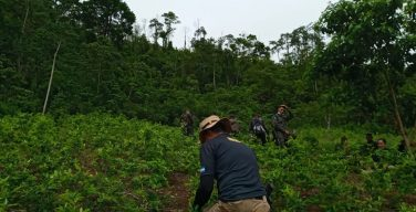 Honduran Armed Forces Destroy Coca Field