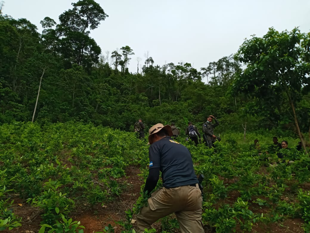 Honduran Armed Forces Destroy Coca Field