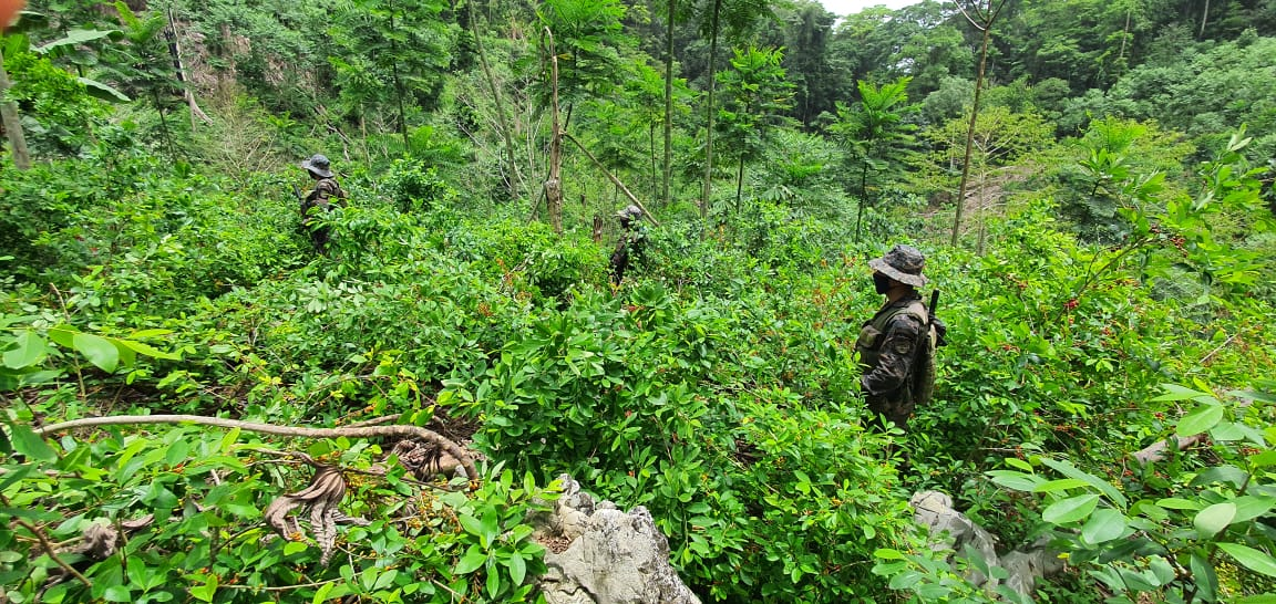 Guatemalan Army Destroys Coca Crops