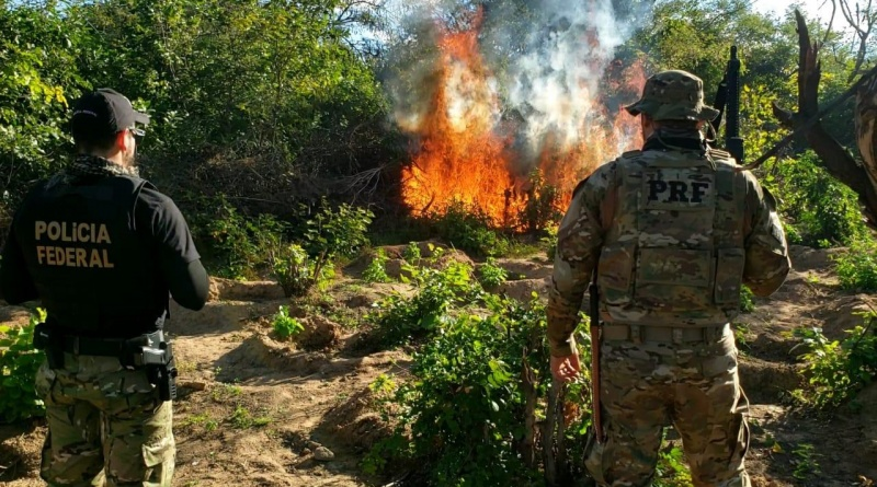Federal Highway Police Seizes Over 300 Tons of Marijuana on Brazil's Roads in 2020
