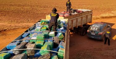 Operation Horus Seizes More Than 33 Tons of Marijuana