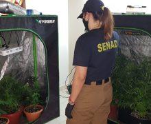 Paraguay Dismantles 'VIP Marijuana' Labs