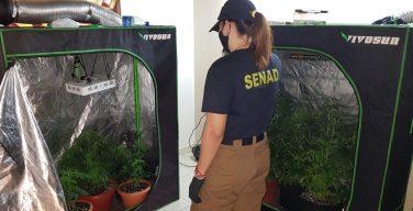 Paraguay desmantela laboratorios de 'marihuanaVIP'