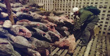 As águas latino-americanas continuam sendo vítimas da pesca chinesa?