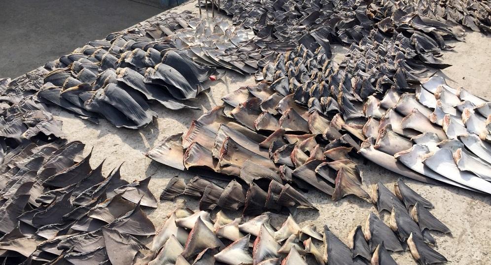 Pesca ilegal destrói o meio-ambiente