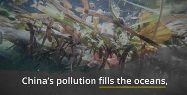 China's overfishing and pollution harms the world's oceans