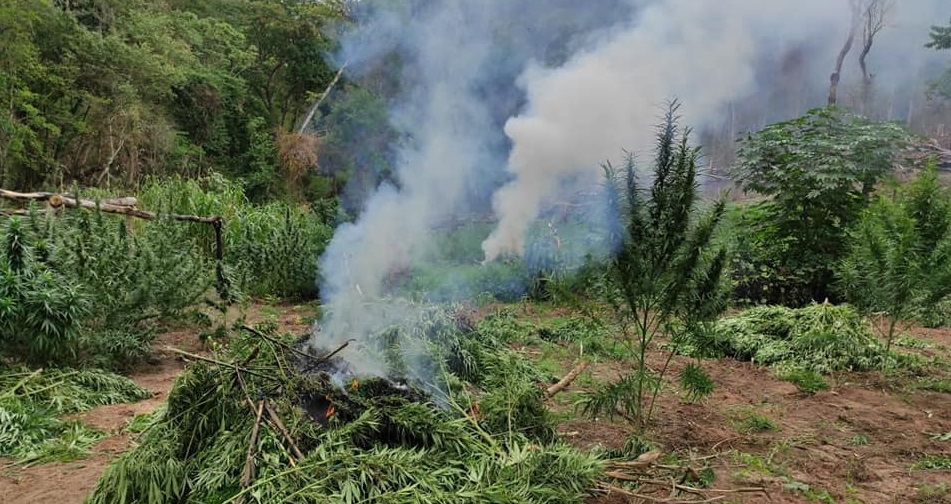 Bolivia: Anti-drug Agents Destroy More Than 8 Tons of Marijuana