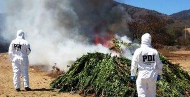 Polícia do Chile ataca produção de drogas