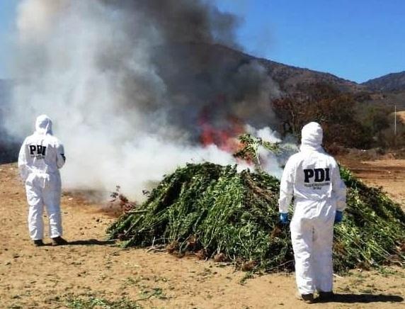 Policía de Chile ataca producción de drogas