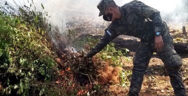 Plantações de coca, ameaça crescente em Honduras