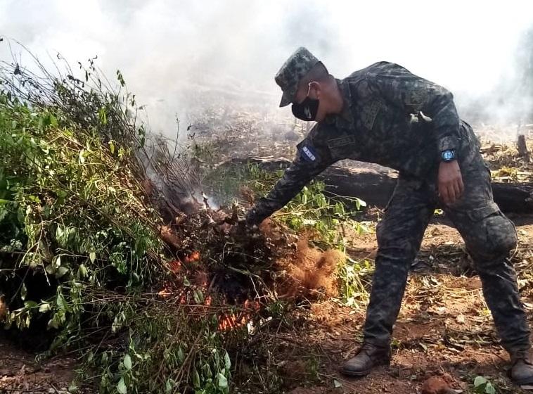 Plantaciones de coca, amenaza creciente en Honduras