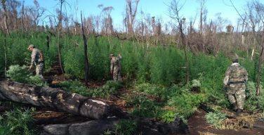 Paraguai: agentes destroem quase 60 toneladas de maconha