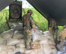 Paraguay: Anti-Drug Agents Seize Nearly 9 Tons of Marijuana