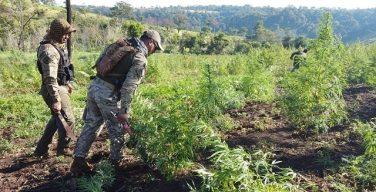 Paraguay: Anti-drug Agents Destroy Nearly 1,500 Tons of Marijuana