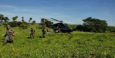 Paraguay y Brasil anulan casi 2000 toneladas de marihuana en 15 días