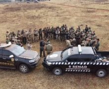 Brazil and Paraguay Destroy 48 Tons of Marijuana in Operation New Alliance XXVI