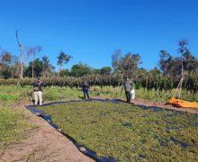 Paraguayan Anti-Drug Agents Seize More than 18 Tons of Marijuana
