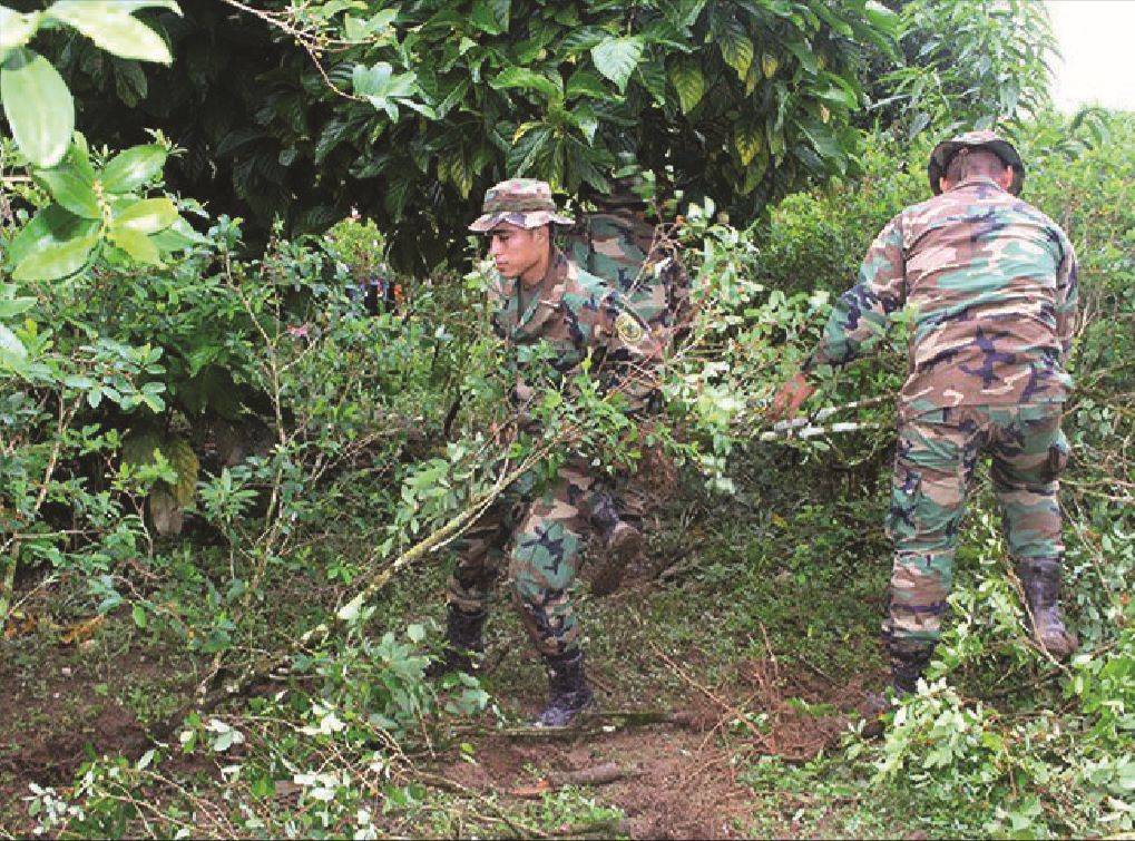 Bolivia Eradicates More than 2,000 Hectares of Coca Crops in 3 Months